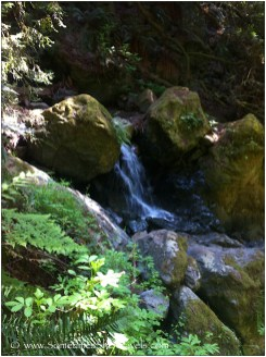 One of many cascades along the Steep Ravine Trail