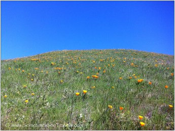 Hillside of wildflowers