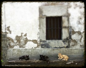 three cats on old wall