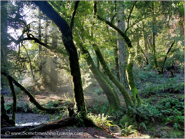 Morning LIght Through Trees II