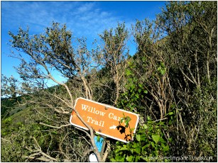 Willow Camp Trail sign in bushes