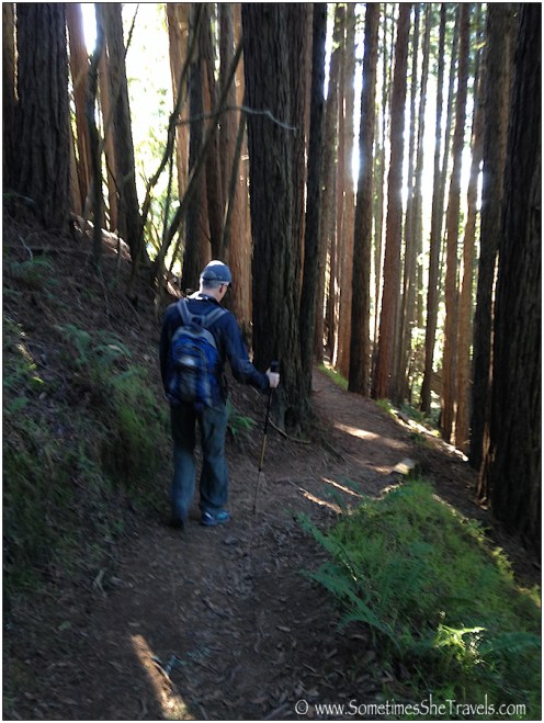 Don walking the forest path as we head back to Stinson
