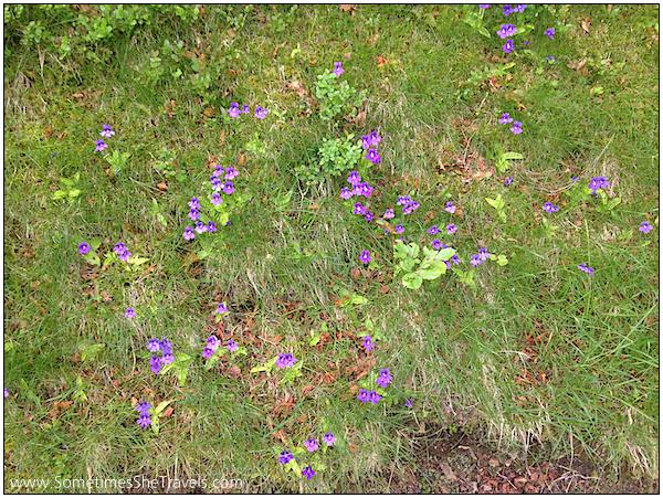 Day 2 purple flowers