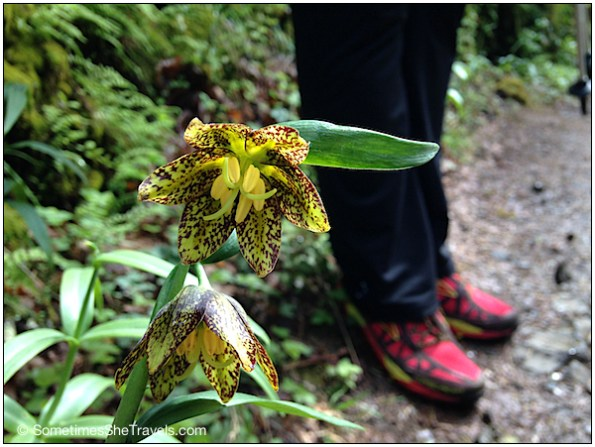 "Fritillaria or ""Checkered Lily"" and Jen's beautiful Brooks Cascadias"