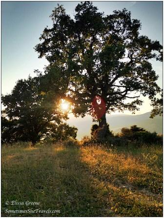 Sunset Oak Tree, Salinas