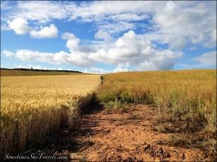 camino de santiago fields sky clouds