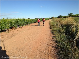 camino de santiago pilgrims on road through fields