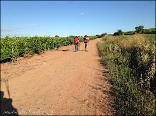 camino de santiago pilgrims on road through fields
