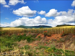 camino de santiago poppies fields mountains sky