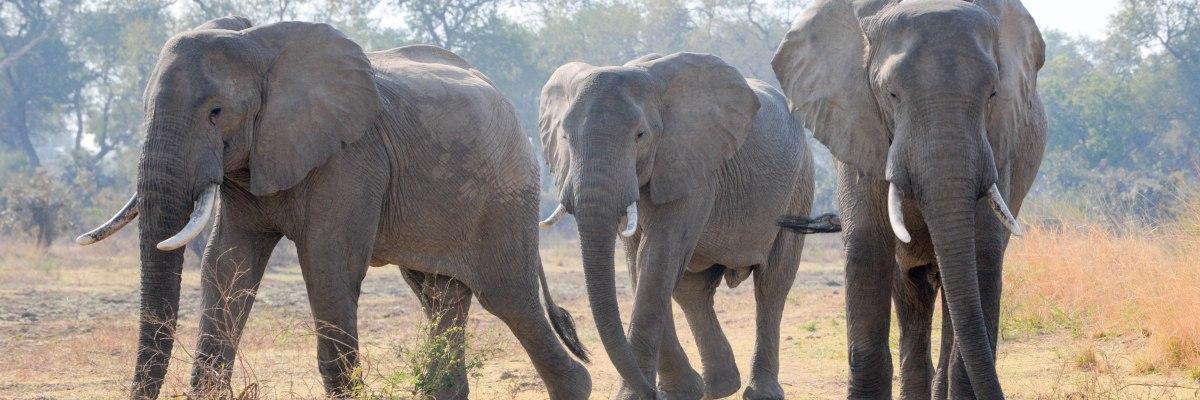 Safari in Zambia