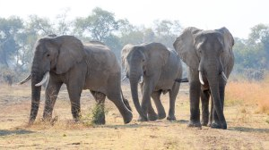 What did I learn on safari in Zambia? Rather a lot as it happens…