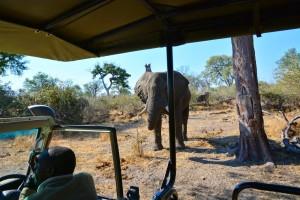 Botswana game drive