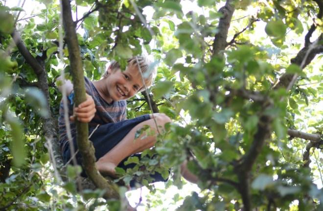 Easton in tree