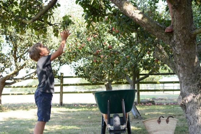 quin grabbing apples