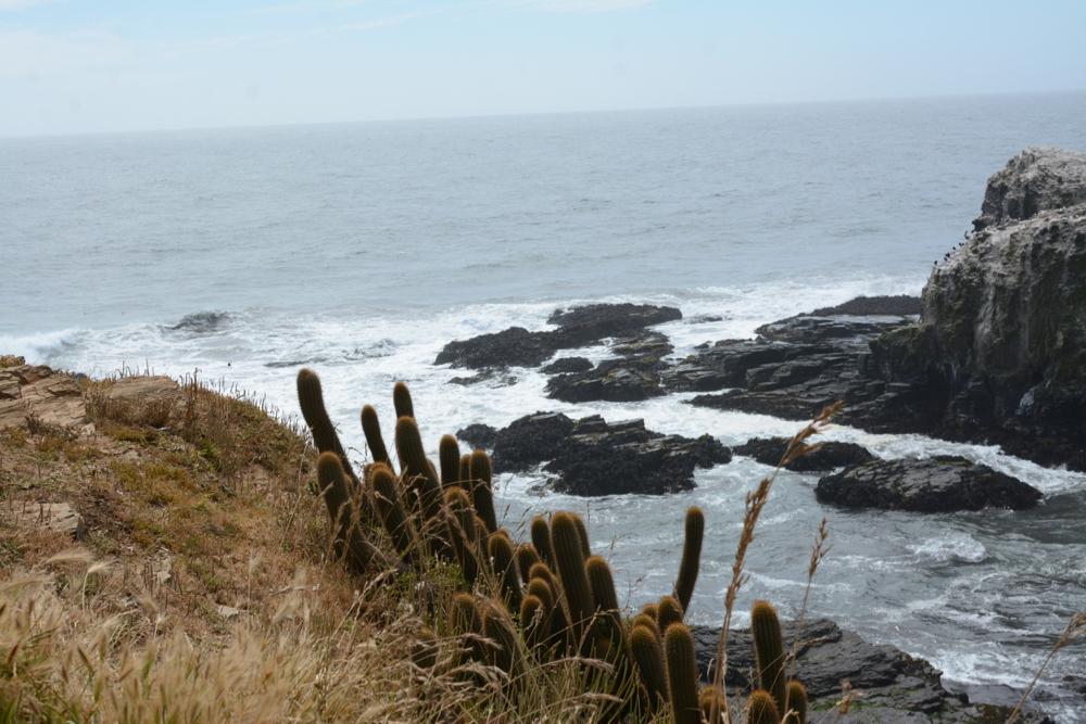 Punta de Lobos & the Best of Pichilemu, Chile - Somewhere Slower