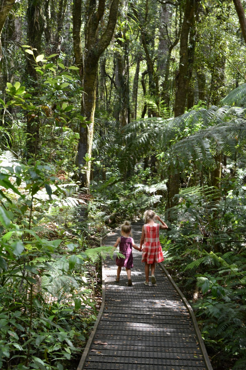 walking in the kauri forest