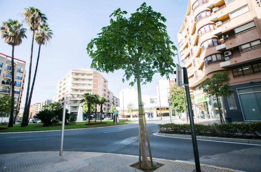 Gandia plantación árboles