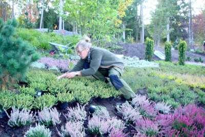 Sommarbo trädgård - 001