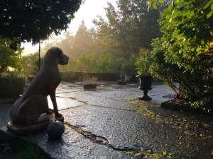 Morgonljuset på hunden vid piazzan