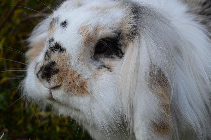 konijnen4