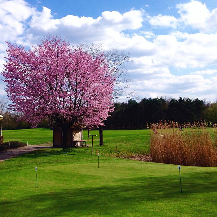photo diary 16 golf