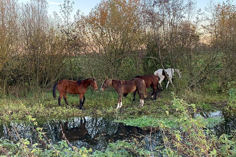 Herfstwandelen in de Kampina paarden
