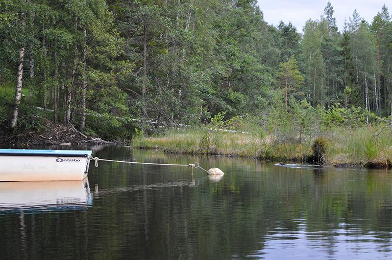 Met de kano op beversafari in Dalarna 01