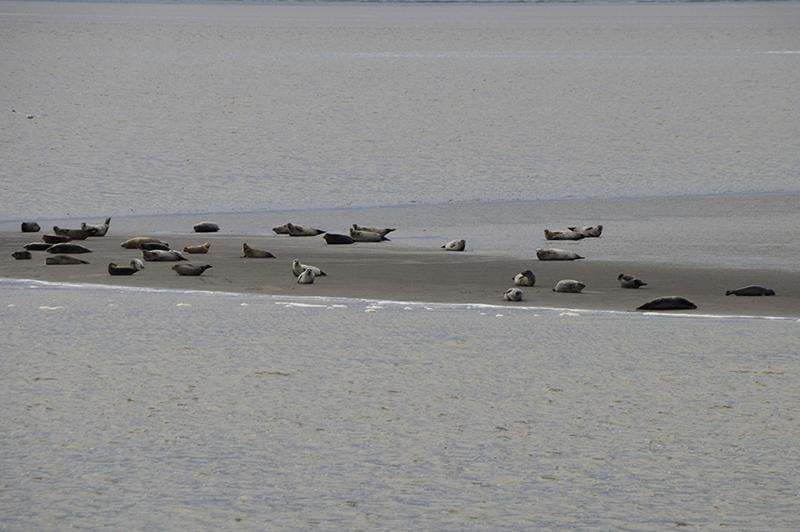 Robbentocht Ameland - zeehonden