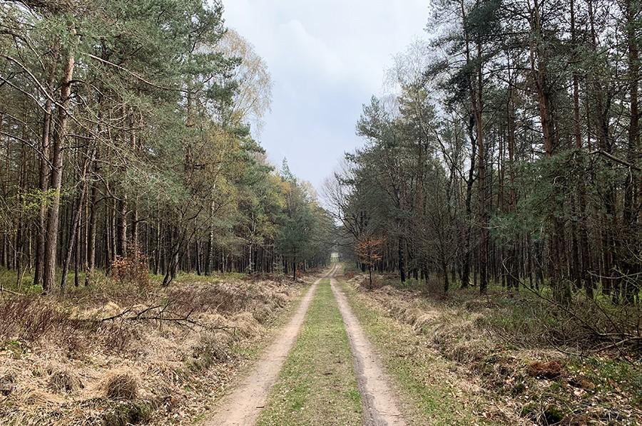 Wandelen in Nationaal Park Veluwezoom bossen