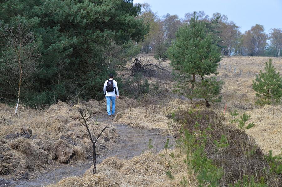 Wandelen in Nationaal Park Veluwezoom maurice