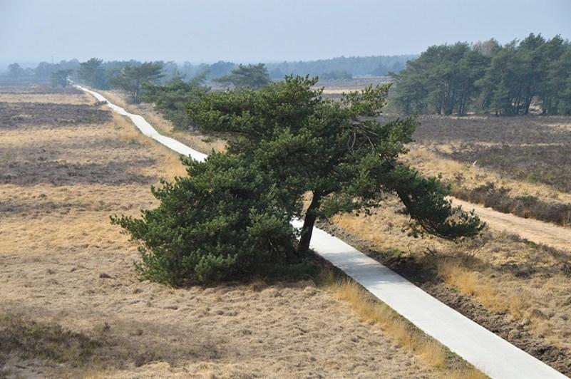 Wandelen in Nationaal Park Veluwezoom tunnel tree