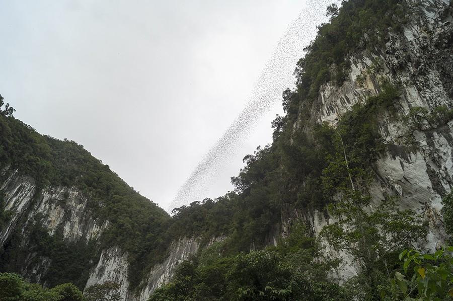 Beleef het magische Borneo - vleermuizen op Gunung Mulu