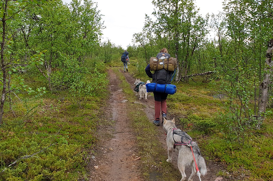 Meerdaagse trekking in Zweedse Lapland