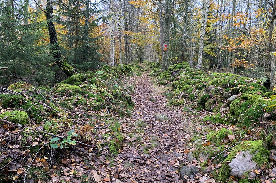 Fulltofta trail bos - sommarmorgon.com