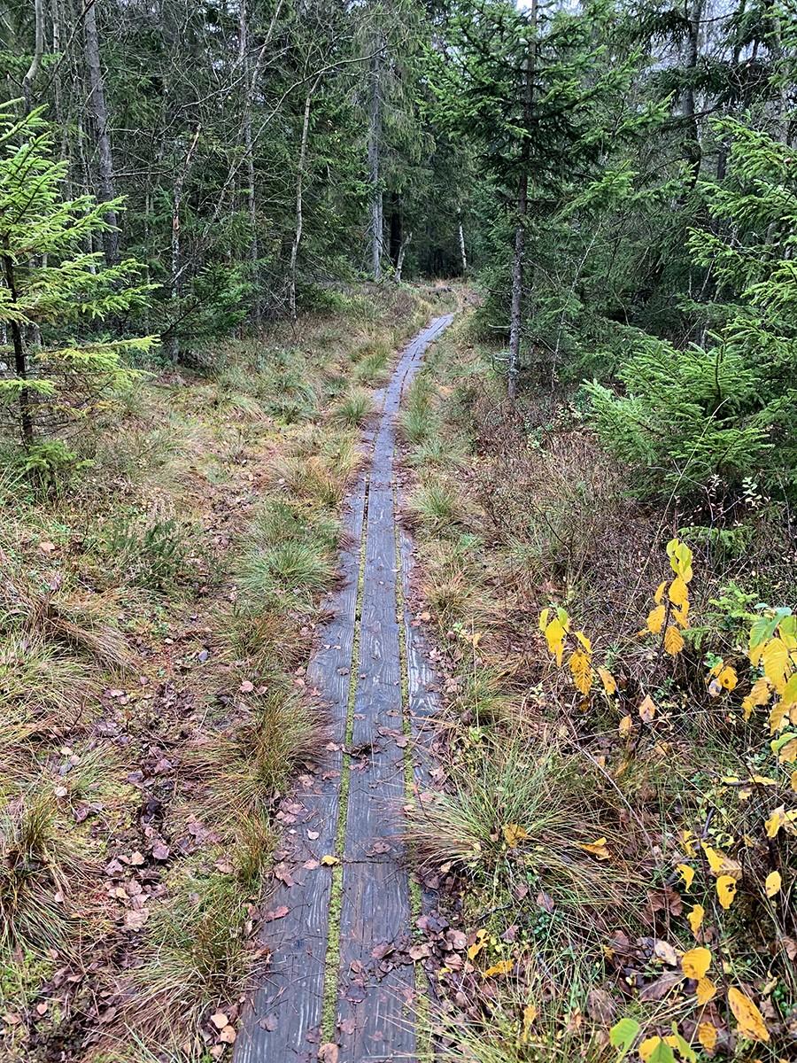Fulltofta trail loopplanken - sommarmorgon.com