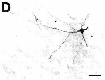 Fig. 4D