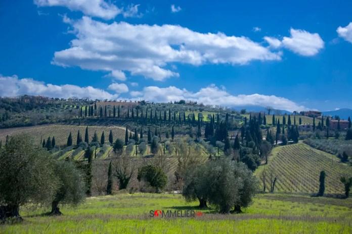 Vino-rosso-brunello-di-montalcino-santantimo-sommelierlife