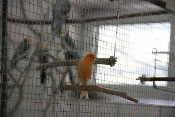 Vögel im Tierheim Hamburg: Kanarienvogel