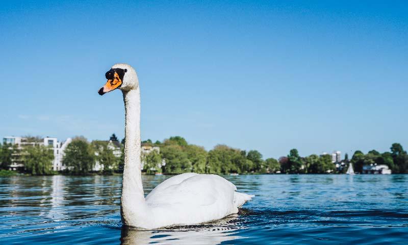 Bunte Aktivitäten im Sommer in Hamburg - mit Alsterschwan