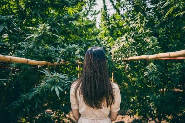 Hanfdebatte: Ist Cannabis in der Schweiz legal?