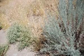 blue-bunch grass, grasslands of the Similkameen