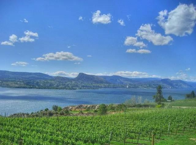 Naramata Vineyards over looking Okanagan Lake