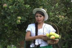 Alegoria, Feria de la Manzana