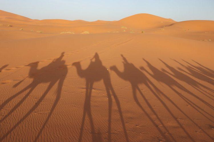 Camellos desierto de Merzouga Sombras
