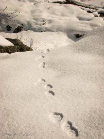 Колебаем се дали следите са от заек, катерица или друго животно :)