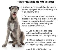 Training dog to stay with you off leash, how to stop my ...