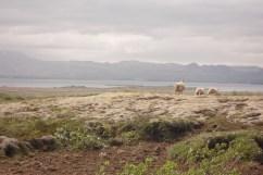 Tres ovejas andando sobre el musgo de la pradera y al fondo el enorme lago.