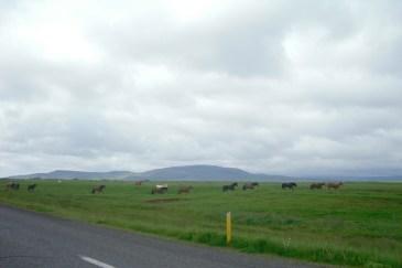 Haciendo autostop nos sorprendió una manada de caballos. Pertenecían a un granjero de la zona. Tras horas de autoestop tuvimos que retroceder, nadie nos quiso coger.