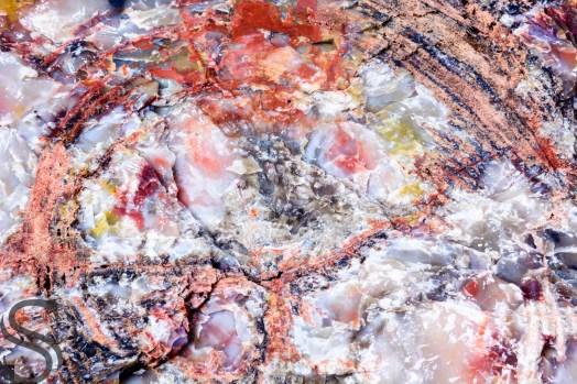Macro of Petrified wood, Petrified National Forest, AZ