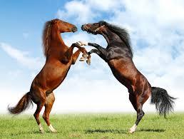 caballo pura sangre 2